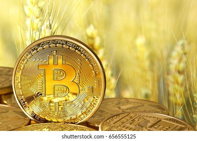 Bitcoins (new virtual currency) against the background of wheat. Conceptual photo.