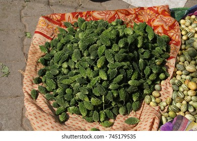 Bitter melons in market in  Jaipur, Rajasthan, India