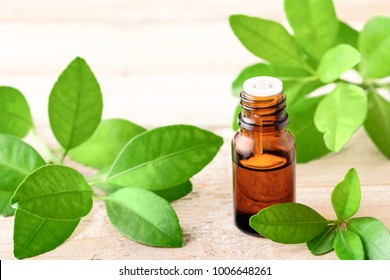 bitter orange leaf essential oil and fresh leaves