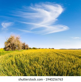 Bizarre clouds. Spring bloom of the Negev Desert. Israel. Magnificent blooming spring. Field of blooming daisies in the bright southern sun.