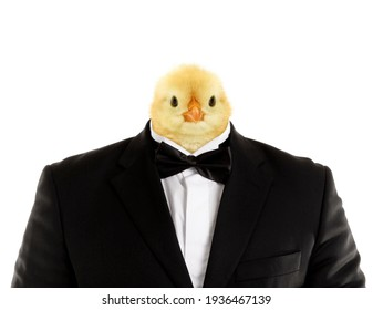 Bizarre image of huge man in suit with cute chick head funny conceptual photo