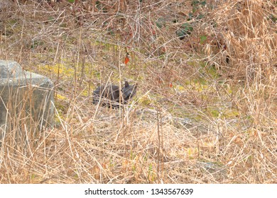 A black adult barn cat keeps a fixed watchful eye on the intruder as it stands crouched in tall winter grass.