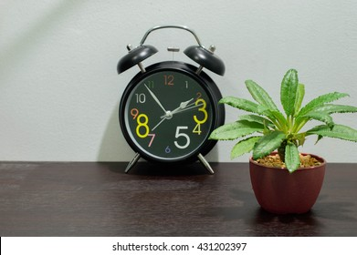 Black Alarm clock with Cactus species Dorstenia Foetida or Grendelion in Mini Potted plants Were placed on the desk