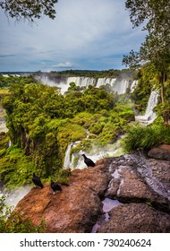 The black Andean condors sit on the edge of the ledge. Picturesque ledges form the famous waterfalls. Waterfalls Iguazu. The concept of active and exotic tourism