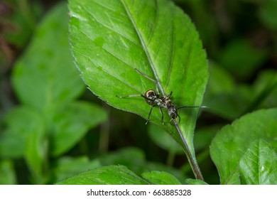 black ant on green leaf, wild insect