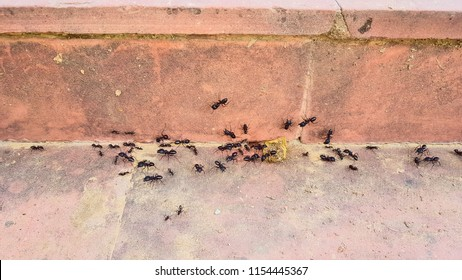 Black ants are creeping on the floor and wall.