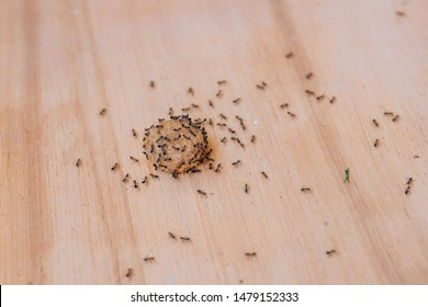 Black ants on dry dog food. Garden ants in the house. Food spoilage with black lasas. Small garden insects