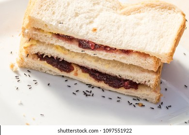 Black ants on a white breat sandwich