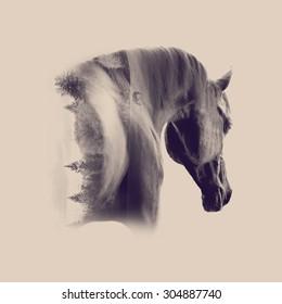 black arabian stallion portrait closeup against desert background double exposure