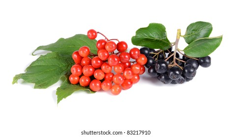 black ashberry and red viburnum  isolated on white background