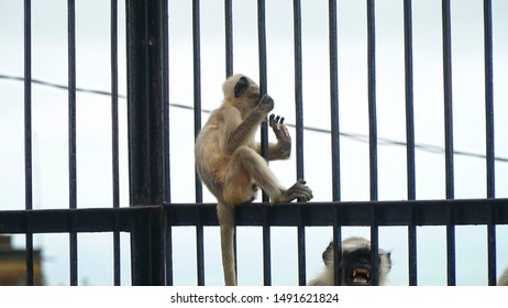 black baby indian monkey sitting