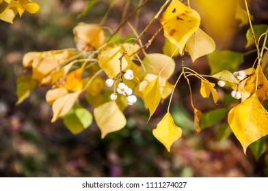 Black banyan tree - Shutterstock ID 1111274027