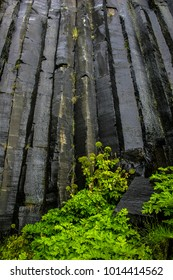 Black basalt stone columns  iceland with green plants