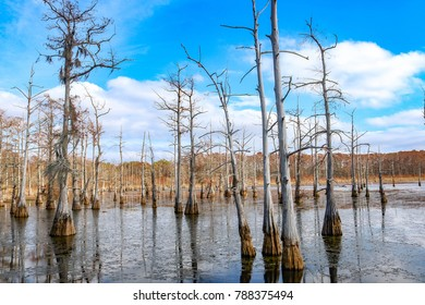 Black Bayou Lake in Monroe, Louisiana