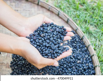 Black beans in hand, And  in a wooden tray