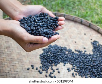 Black beans in the hands of women.