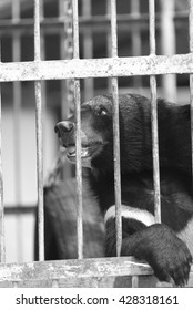 black bear in cage, black and white