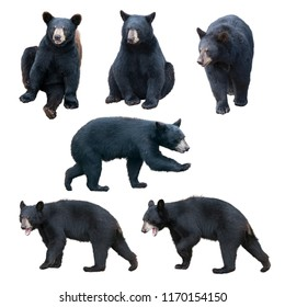 Black bear collection isolated on white background
