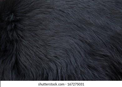 black bear fur texture