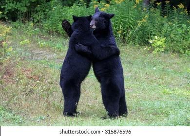 Bear Hug Images, Stock Photos & Vectors | Shutterstock