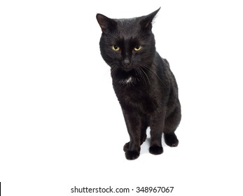 Black beautiful cat isolated on a white background.