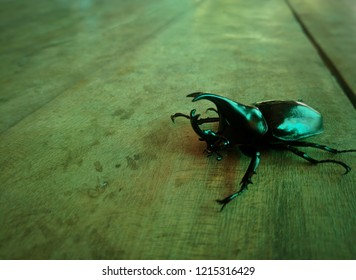Black beetle crawling.a small arthropod animal that has six legs and generally one or two pairs of wings.