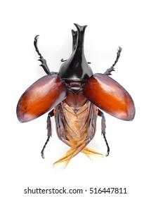 Black beetles isolated on white background.