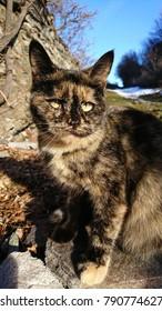 Black and beige Kitten Sion, Valais / Wallis, Switzerland