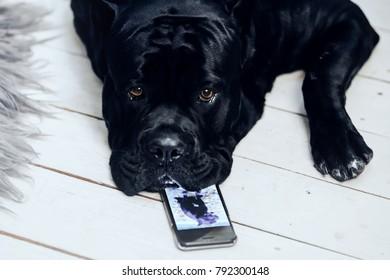 Black big dog