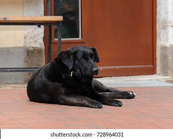 Black, big dog resting on the ground in front of bench and door