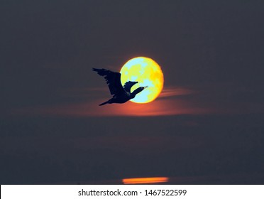 Black bird of prey against the Golden disk of sun. Symbol of solar Eclipse, concept of nightfall, absorption of good by universal evil. Illustration to theme good and ill that checker life