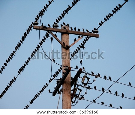 black birds on electrical wires stock photo edit now 36396160 rh shutterstock com Electrical Cord Electrical Plug