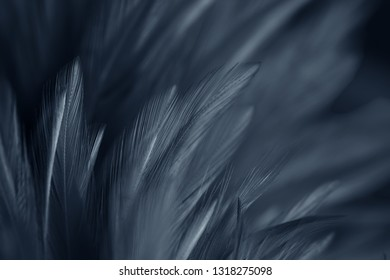 Black blue Chicken feathers in soft and blur style for background and art design