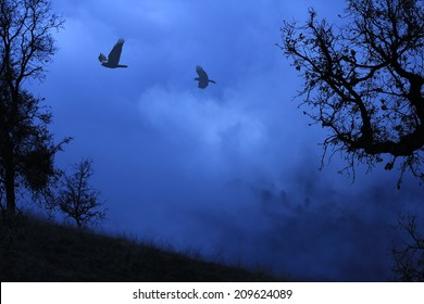 Black and blue surreal foggy landscape with trees and a meadow and birds flying above.