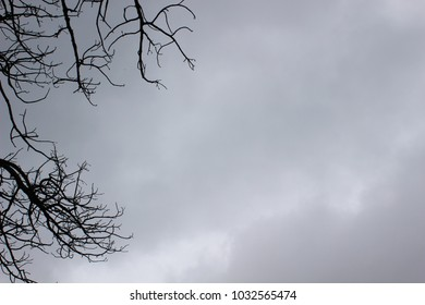 Black branches etched against a grey, rainy sky