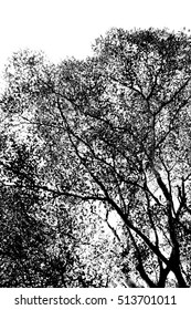 black branches gradient on white