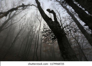Black branches of trees in a foggy autumn forest