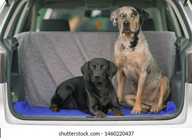 Catahoula Hog Dog Images, Stock Photos & Vectors | Shutterstock
