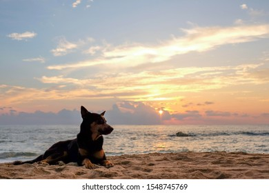 Black and brown dog lay on the beach by the sea in the sunset