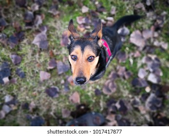 black and brown dog on green grass field close up portrait background bokeh in winter season in the garden