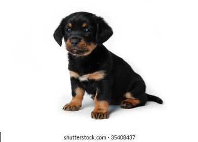 Black and brown puppy isolated on white background