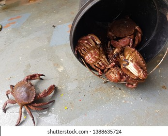 Black bucket with a crabs on deck