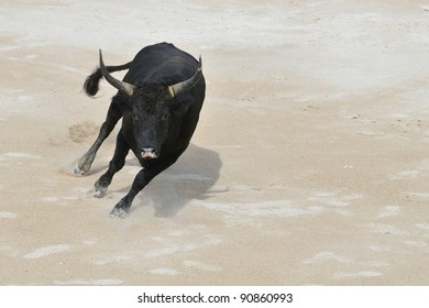 A black bull charging towards camera