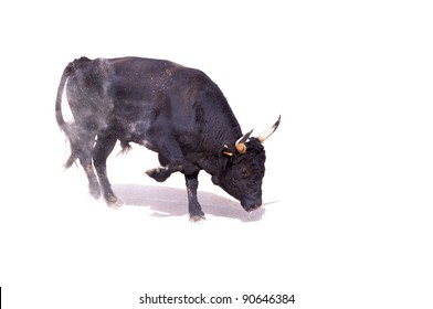 A black bull paws up dust preparing to charge, with shadow