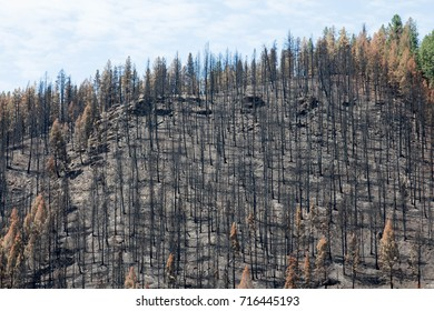 Black and burned hilltop from the Lightner Creek forest fire in Durango, Colorado