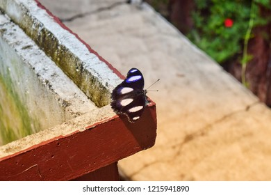 Black butterflies fly by the wind and sunshine.