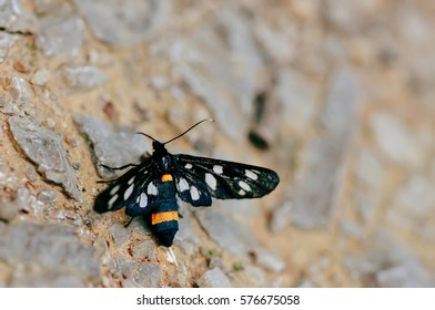 Black Butterfly, Background, Nature