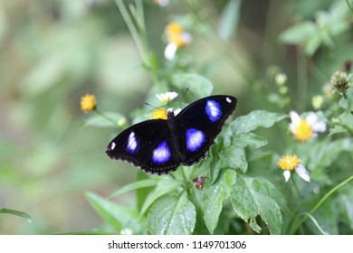 black butterfly in the garden
