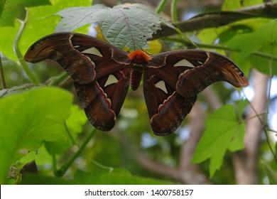 Black butterfly in jogjakarta forest
