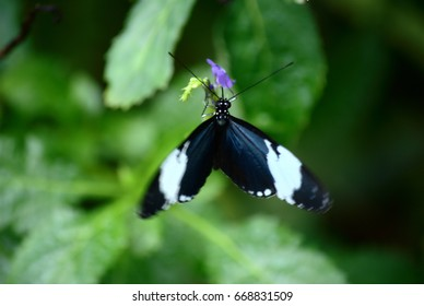 Black butterfly on purple flower